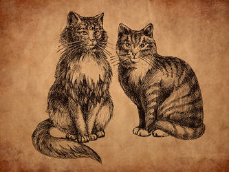Two cats drawing by feoris