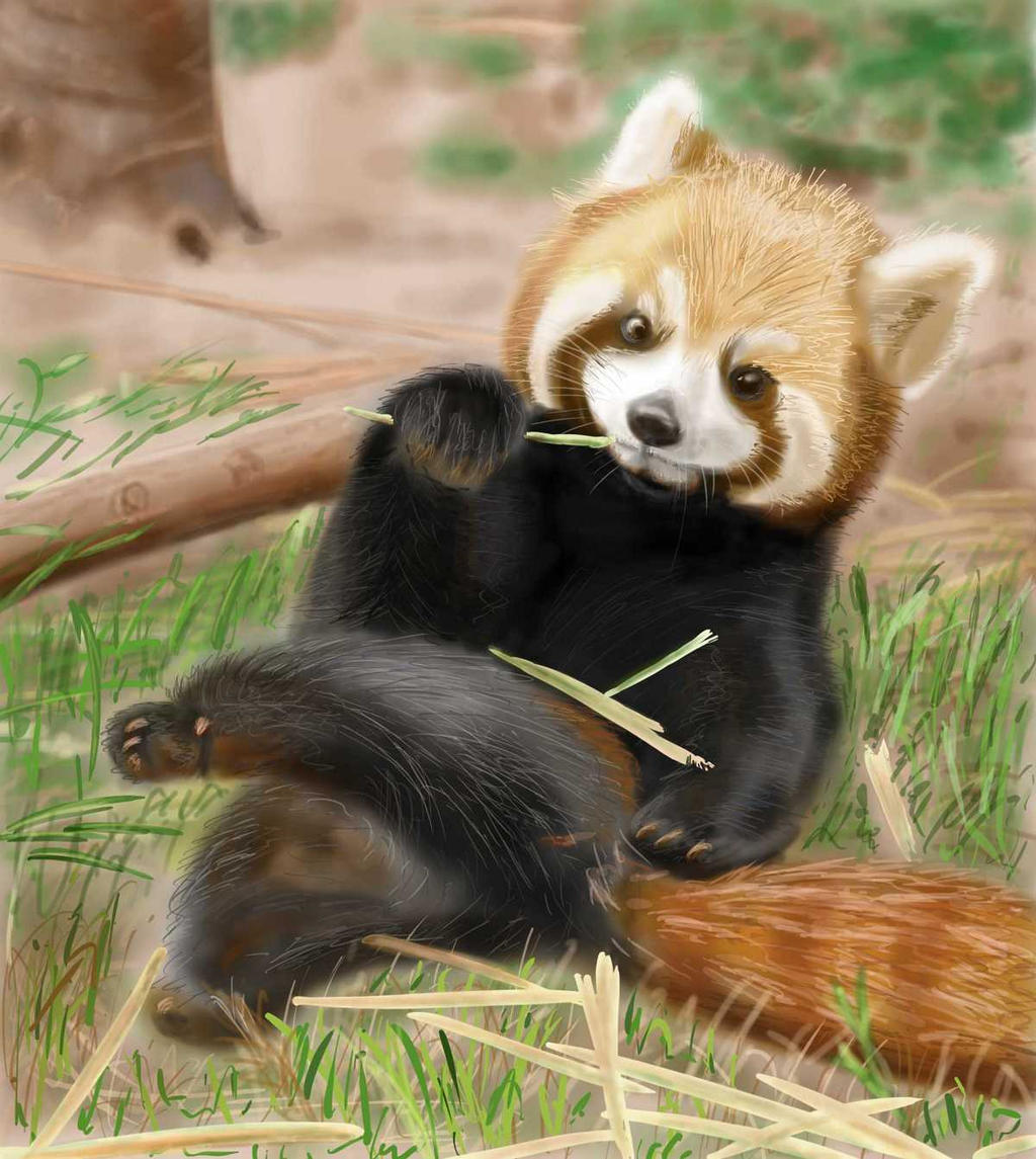 Red Panda by 50ShadesOfShame
