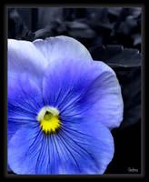 Blue by Sedma