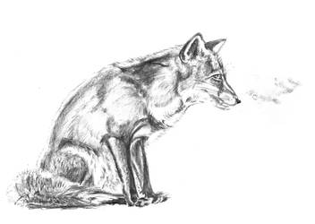 Fox-Sketch 1 by BrokenShell121