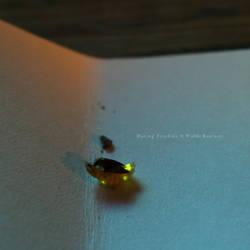 Mating Fireflies by BrokenShell121
