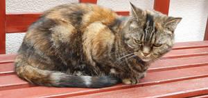 Grumpy Cat in Lbeck
