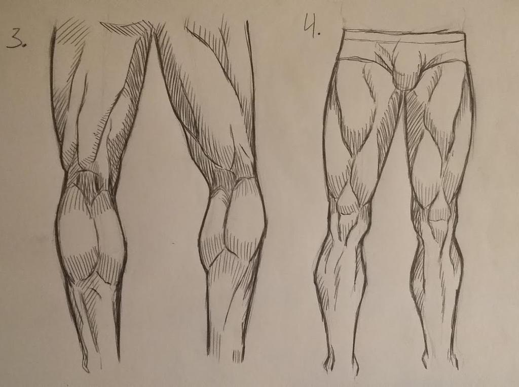 Anatomy Of The Human Leg Study 2 By Max Manga On Deviantart