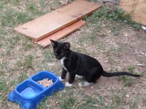 My lil kitty