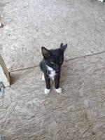 My lil kitty 2