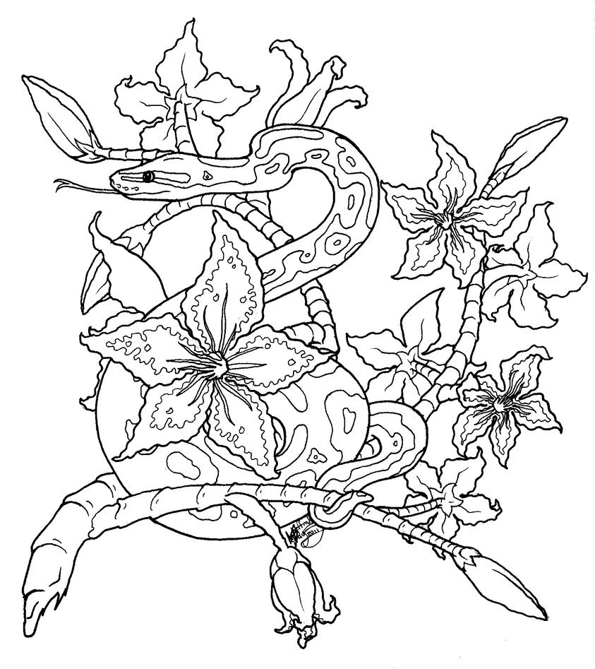 Royal Python Tattoo Lineart by DranixParemoon