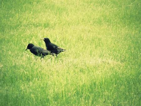 Birds by sukedude