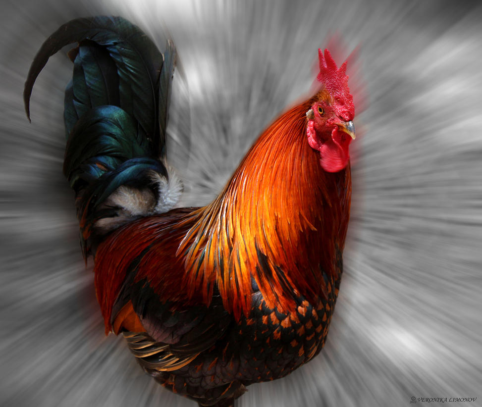 Cock By NikaLim On DeviantART
