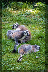 Lemur guerrillas by NikaLim
