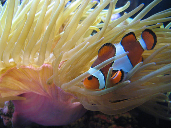 I've found Nemo by krolikova