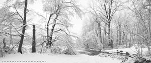 The Beauty of Winter II by Val-Faustino