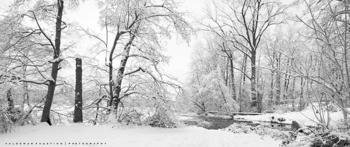 The Beauty of Winter II