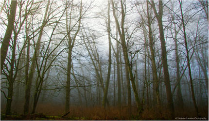Moody Morning Trees II by Val-Faustino