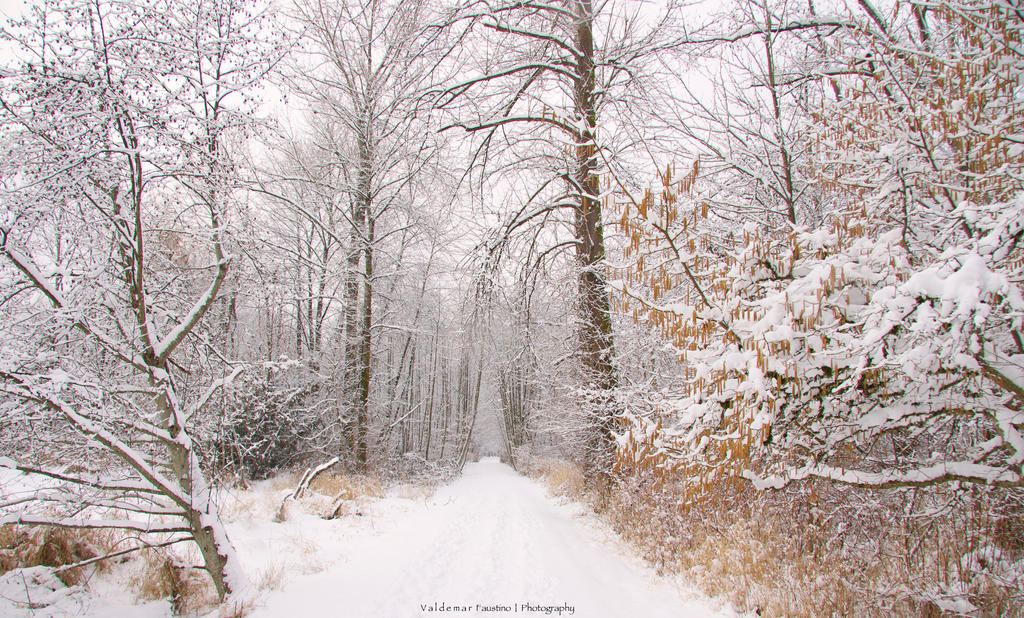 Winter Bliss by Val-Faustino