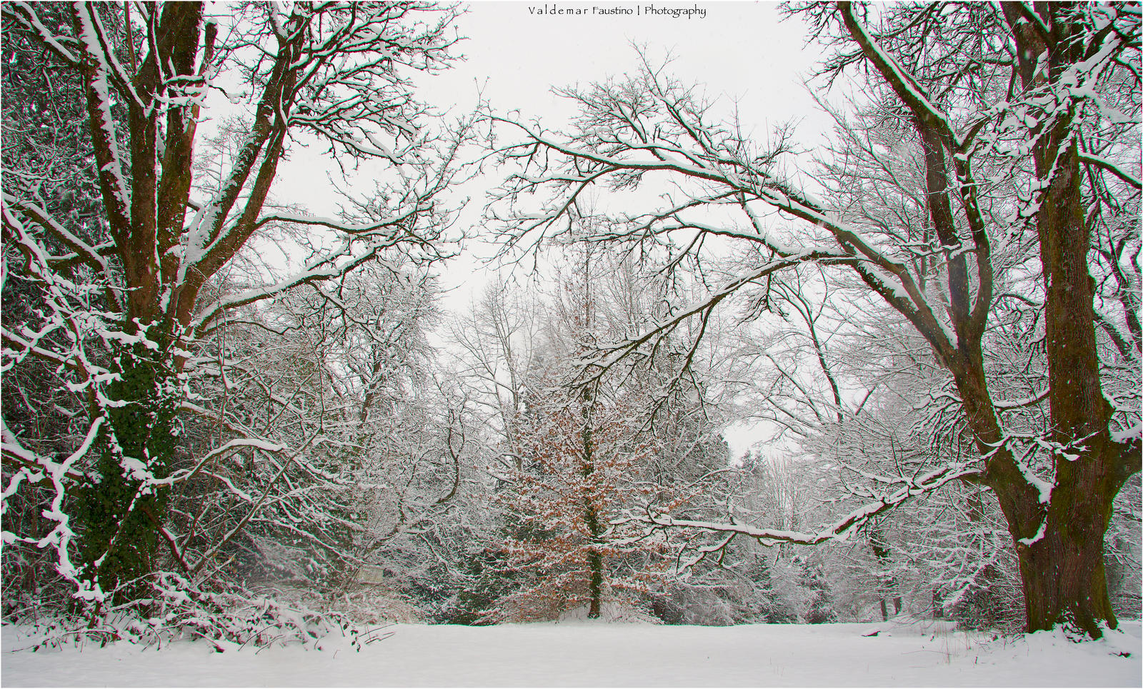 Trees in the Snow by Val-Faustino