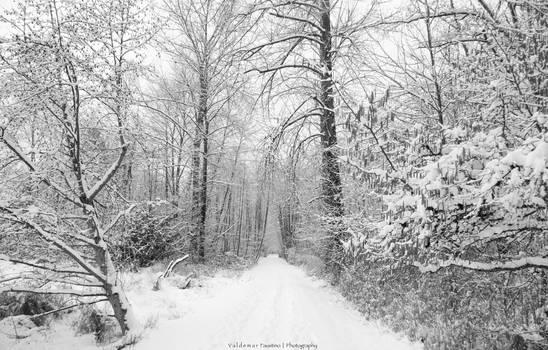 Winter Bliss II