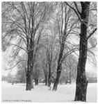 Trees in the Falling Snow by Val-Faustino