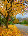 Yellow Leaves of Autumn by Val-Faustino