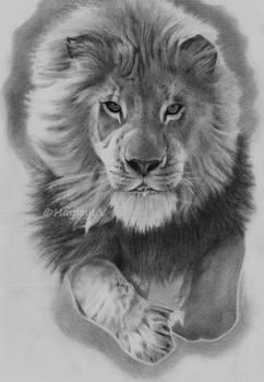 Lauva.