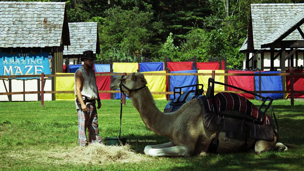 Renaissance Fair Camel by Tauris-Drakkuss