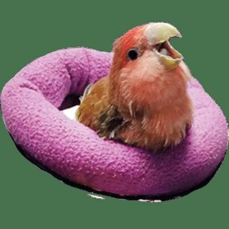 Transparent Bird Meme Pillow Discord Emoji FREE 4U by aHelpfulLoli