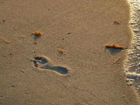 Lost Footprint