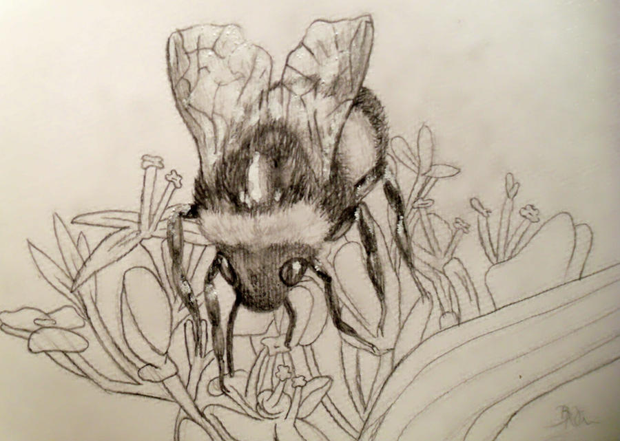 Bumble Bee Sketch By Yukilapin
