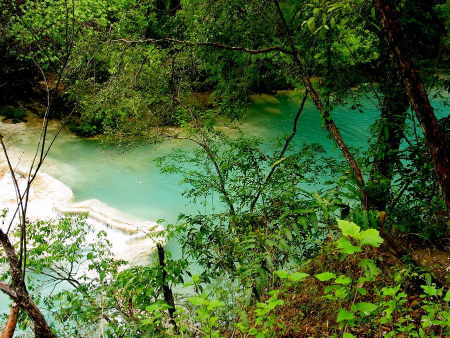 Rainforest by MiniMini24