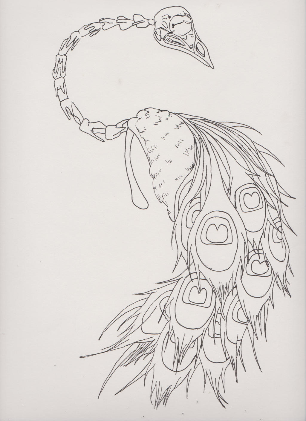 Out Line Art Design : Skeletal peacock tattoo outline by deezneedsammo on deviantart