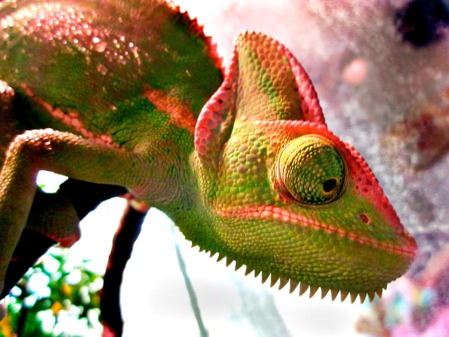 Chameleon or w/e by H-Rasta