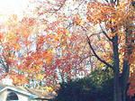 More autumn colors...