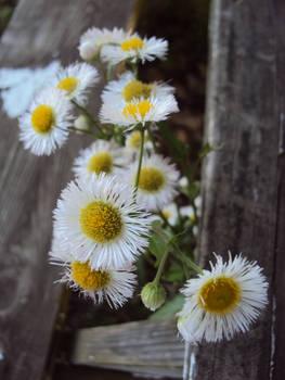 Wildflowers threw the the woodplanks