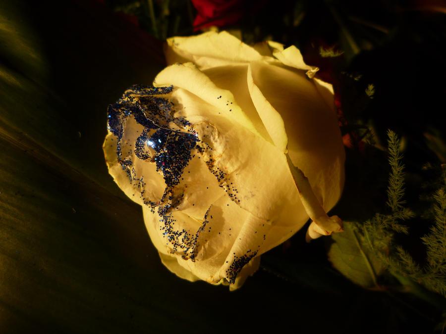 Golden Rose Wallpaper Golden Rose 1 by Mathyrawr