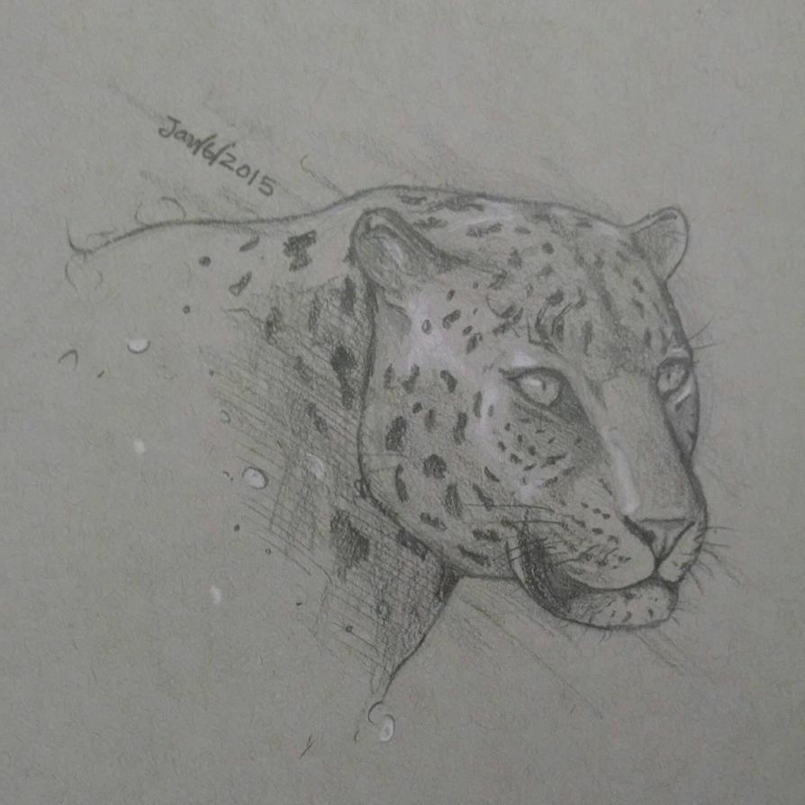 Leopard by HsnGoneWild