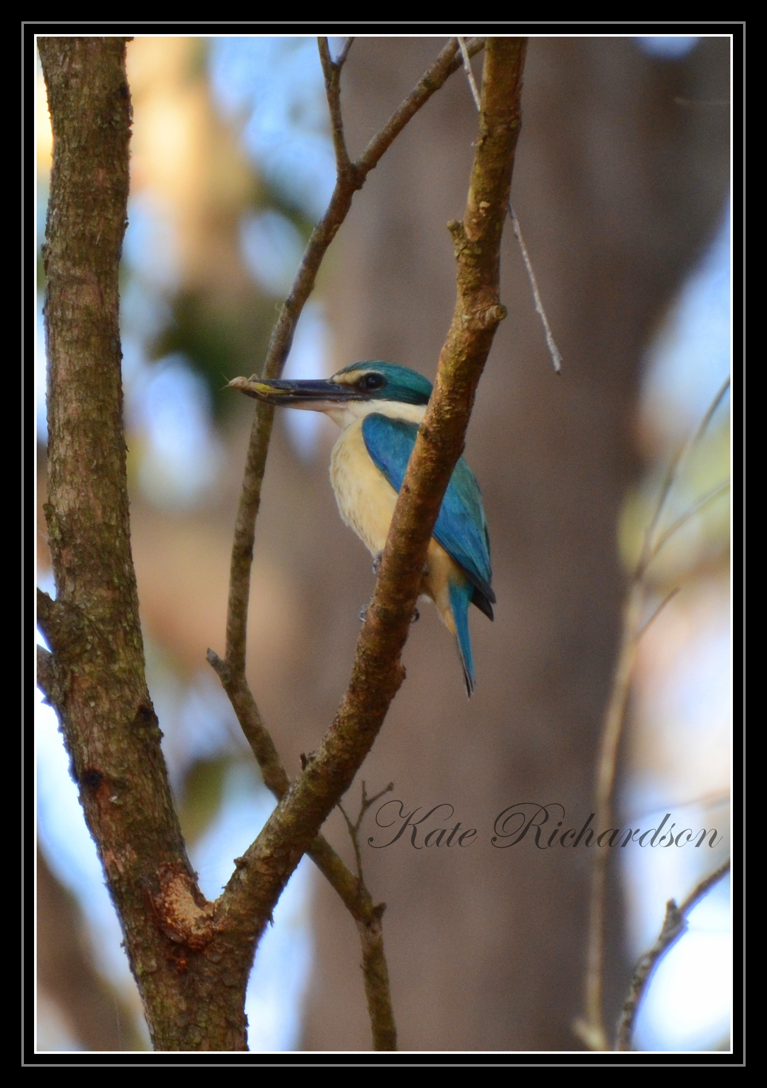 Sacred King Fisher by Purple-Dragonfly-Art