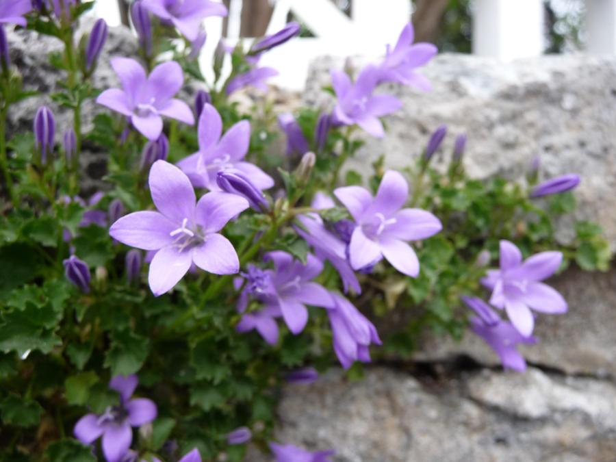 Purple flower by little sam on deviantart purple flower by little sam mightylinksfo