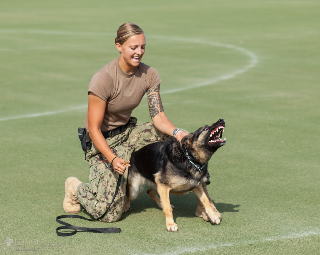 Military working dogs logo - photo#49