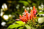 Flower by WillyEpp