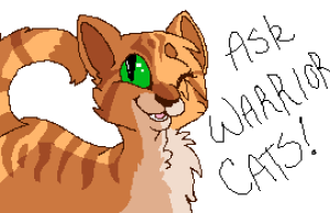 Ask---Warriorcats's Profile Picture