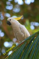 Parrot by icspaceboy