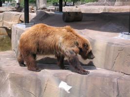 Grizzly Bear : 01 by taeliac-stock