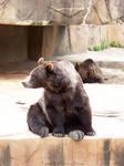 Bear : 01