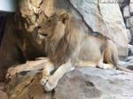 Lion : 05