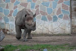 Rhino : 17 by taeliac-stock