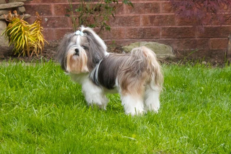 Neighbour S Dog Poo In Shared Garden Scotland