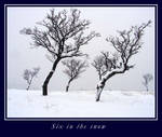 Six in the snow