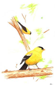 goldfinch marker-sketch