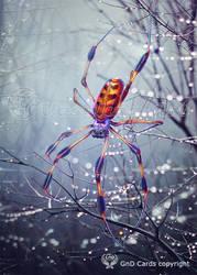 Spider by Vasylina