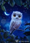 Little-owl by Vasylina