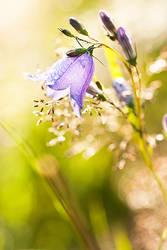 bellflower 2 by kacper00001